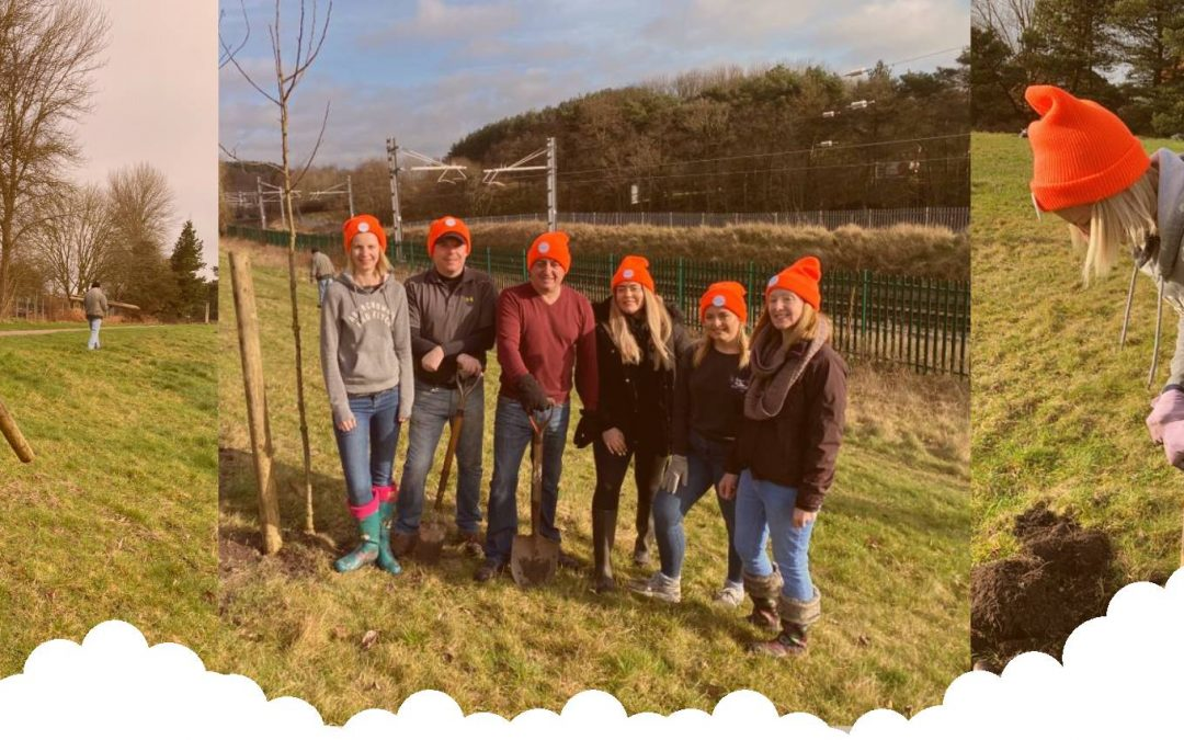 Recruitive LTD Plants Trees In A Bid To Help The Environment